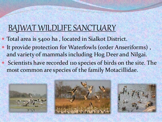 BAJWAT WILDLIFE SANCTUARY  Total area is 5400 ha , located in Sialkot District.  It provide protection for Waterfowls (o...