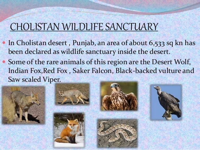 CHOLISTAN WILDLIFE SANCTUARY  In Cholistan desert , Punjab, an area of about 6,533 sq kn has been declared as wildlife sa...