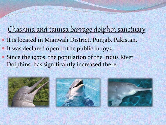 Chashma and taunsa barrage dolphin sanctuary  It is located in Mianwali District, Punjab, Pakistan.  It was declared ope...