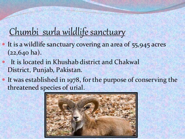 Chumbi surla wildlife sanctuary  It is a wildlife sanctuary covering an area of 55,945 acres (22,640 ha).  It is located...