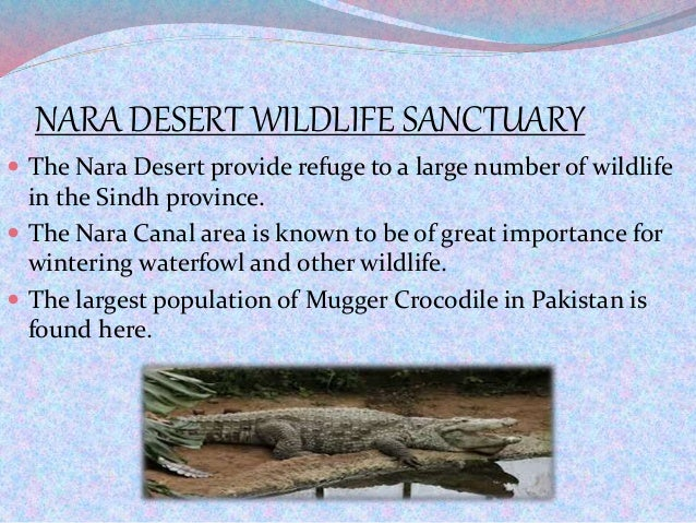 NARA DESERT WILDLIFE SANCTUARY  The Nara Desert provide refuge to a large number of wildlife in the Sindh province.  The...