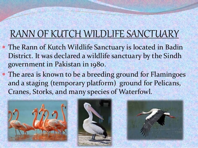 RANN OF KUTCH WILDLIFE SANCTUARY  The Rann of Kutch Wildlife Sanctuary is located in Badin District. It was declared a wi...