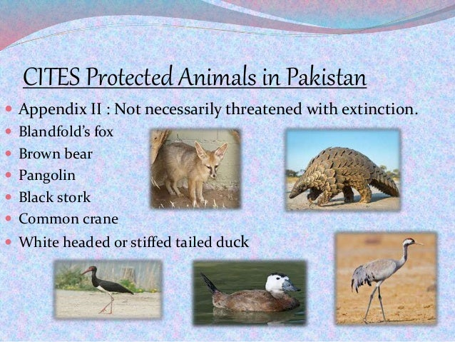 CITES Protected Animals in Pakistan  Appendix II : Not necessarily threatened with extinction.  Blandfold's fox  Brown ...