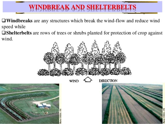 role of grasses and pastures  wind breaks and shelter