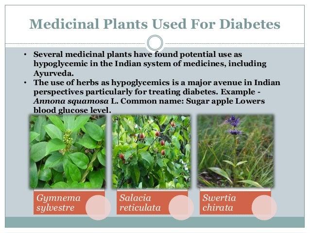 Gymnema Gymnema sylvestre, family- Apocynaceae Common name- Gudmar, Bedakicha pala, Madhunaashini etc.