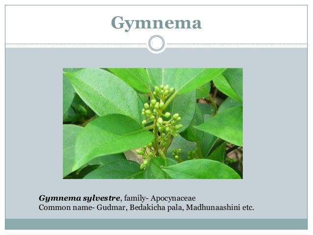 Gymnema- Chemical Constituents Gymnemic acid gymnemasaponin s