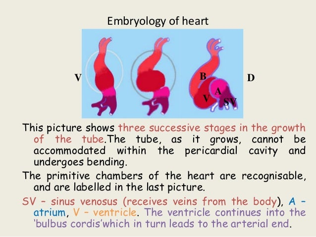 ppt of anatomy of heart & ML imp