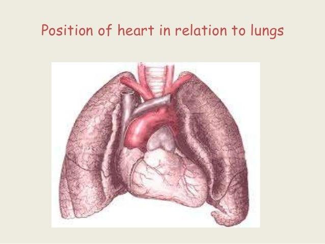 Ppt Of Anatomy Of Heart Ml Imp
