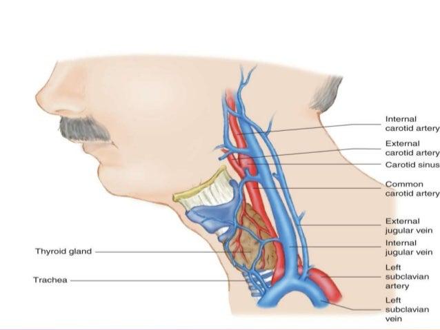 Ppt of anatomy of neck & ML imp