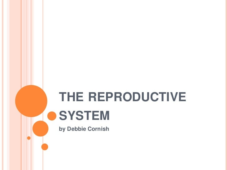 the reproductive system<br />by Debbie Cornish<br />
