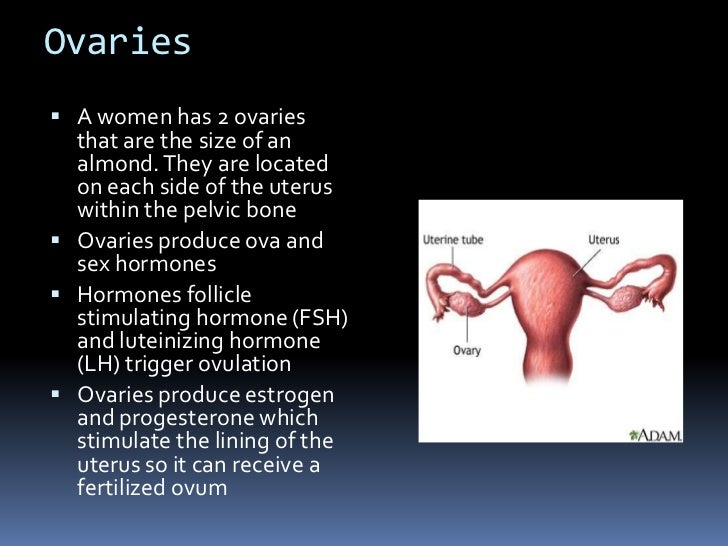 Presentation 10 anatomy and physiology of the female reporductive sys 6 sciox Images