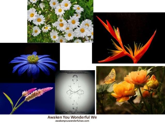Awaken You Wonderful We