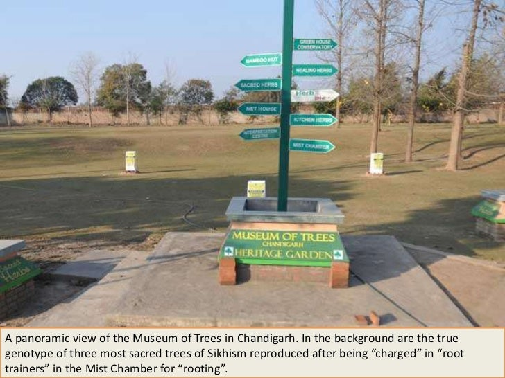 A panoramic view of the Museum of Trees in Chandigarh. In the background are the truegenotype of three most sacred trees o...