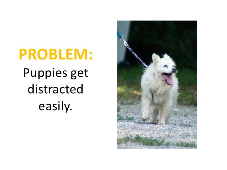 How To Get A Dog To Listen When Distracted