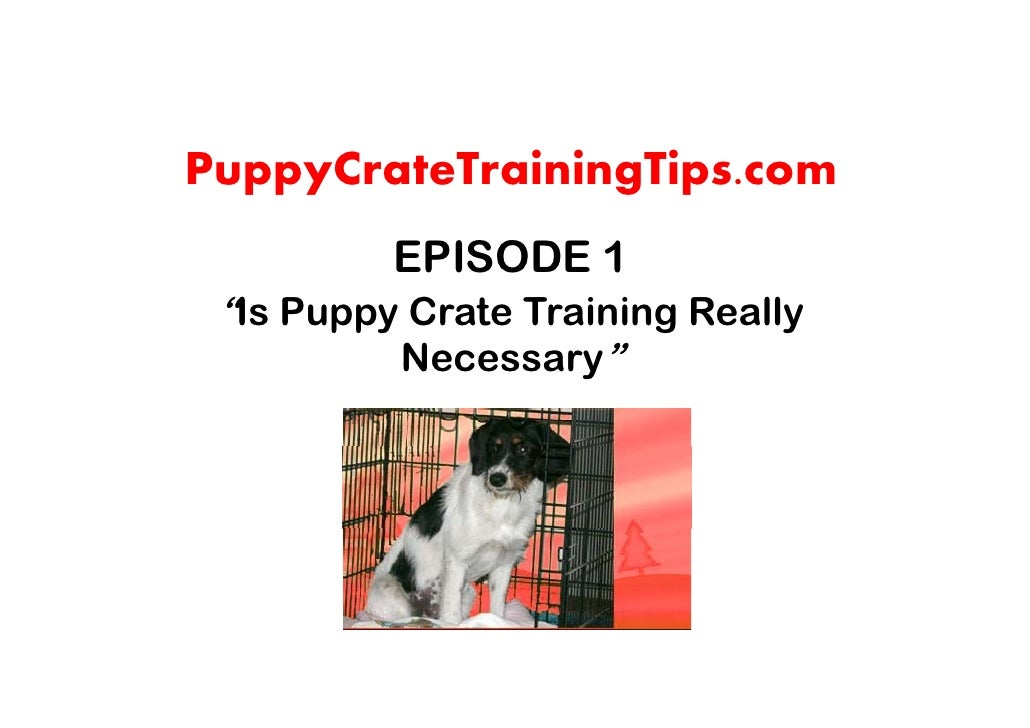 "PuppyCrateTrainingTips.com           EPISODE 1  ""Is Puppy Crate Training Really           Necessary"""