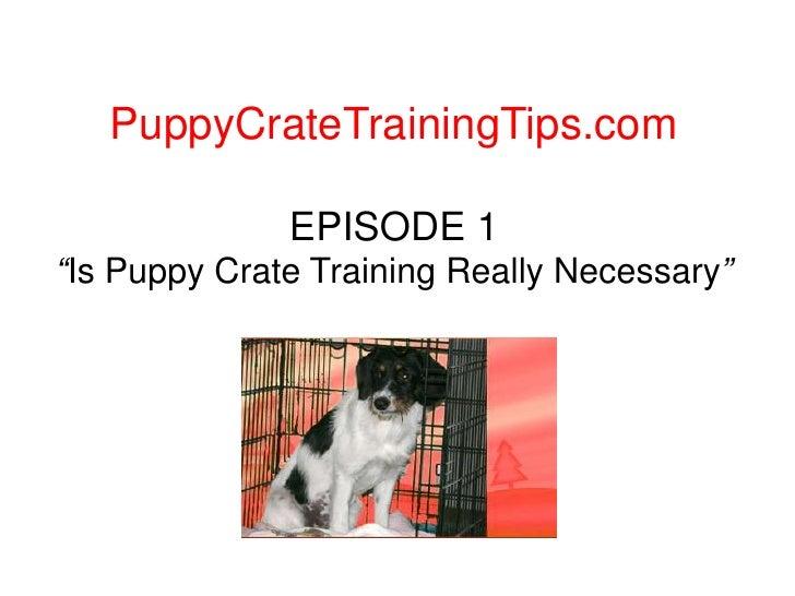"PuppyCrateTrainingTips.com<br />EPISODE 1""Is Puppy Crate Training Really Necessary""<br />"