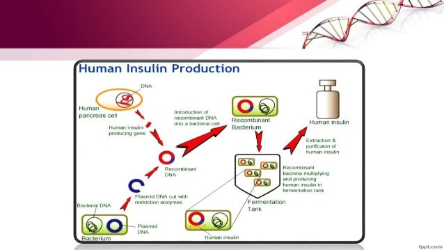 Insulin produced by genetic engineering