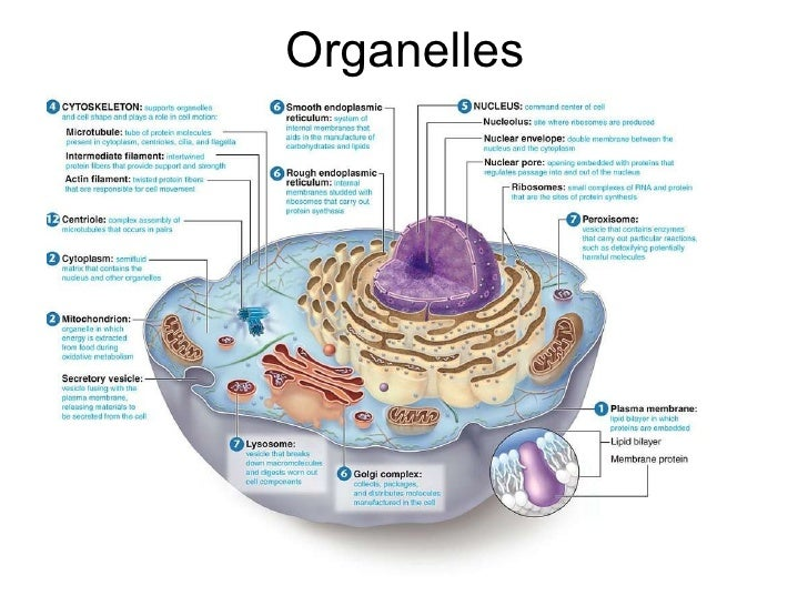 And cell function pdf structure