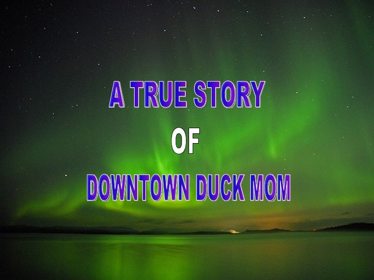 A TRUE STORY OF DOWNTOWN DUCK MOM
