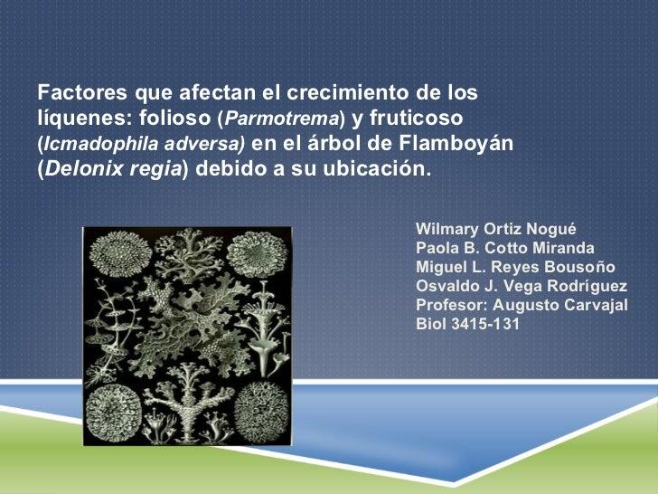 Factores que afectan el crecimiento de loslíquenes: folioso (Parmotrema) y fruticoso(Icmadophila adversa) en el árbol de F...