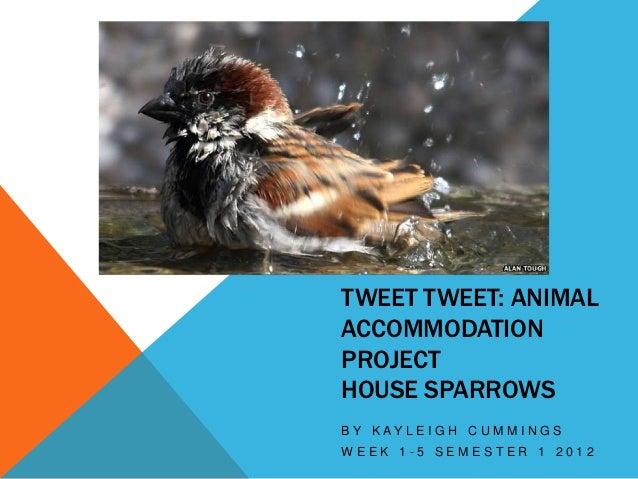 TWEET TWEET: ANIMALACCOMMODATIONPROJECTHOUSE SPARROWSB Y K AY L E I G H C U M M I N G SWEEK 1-5 SEMESTER 1 2012