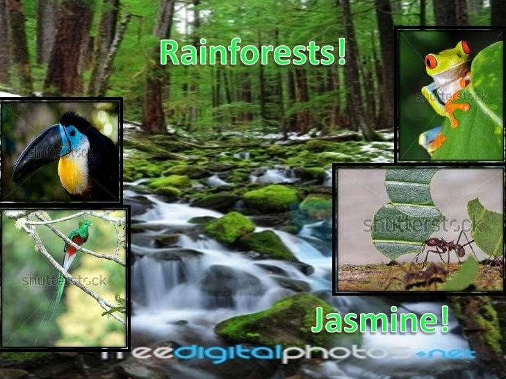 The weather in the rainforest is quite sunny and   hot or sometimes even freezing out in the                    rainforest...
