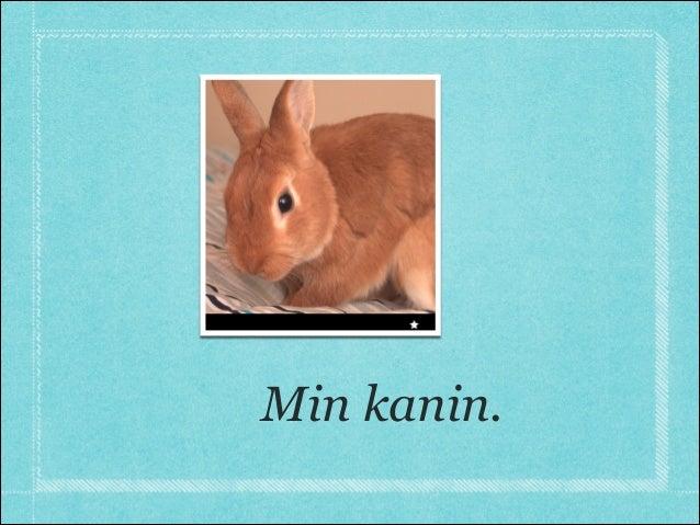 Min kanin.