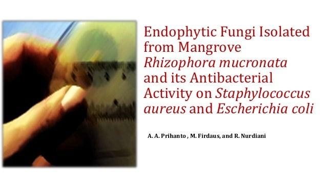 Endophytic Fungi Isolated from Mangrove Rhizophora mucronata and its Antibacterial Activity on Staphylococcus aureus and E...