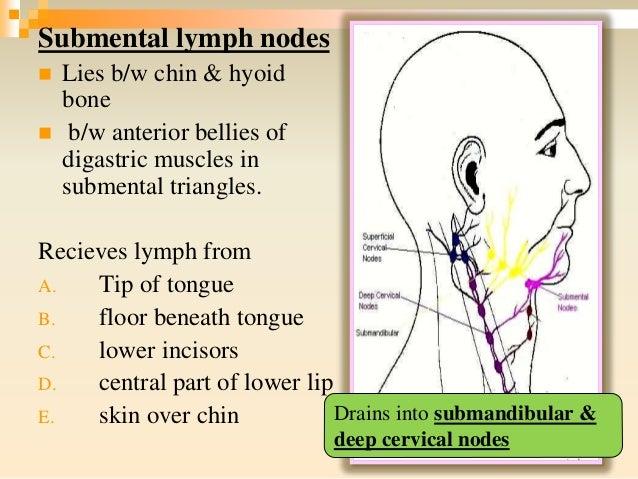 submental lymph node - Hizir kaptanband co