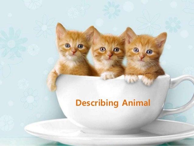 Describing Animal