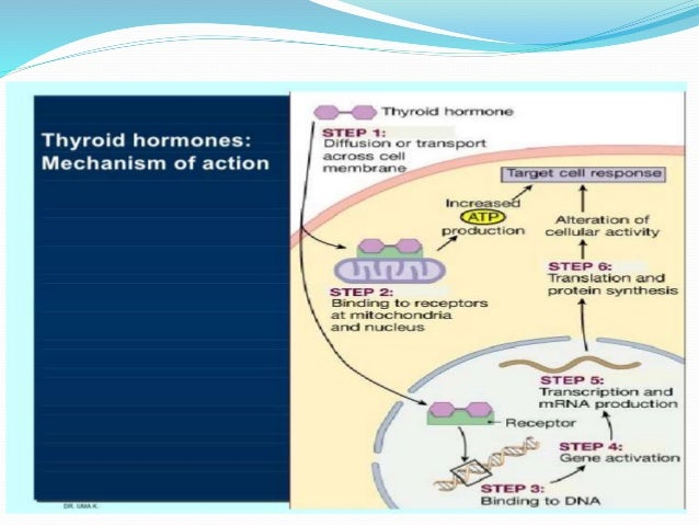 Presentation Thyroxine