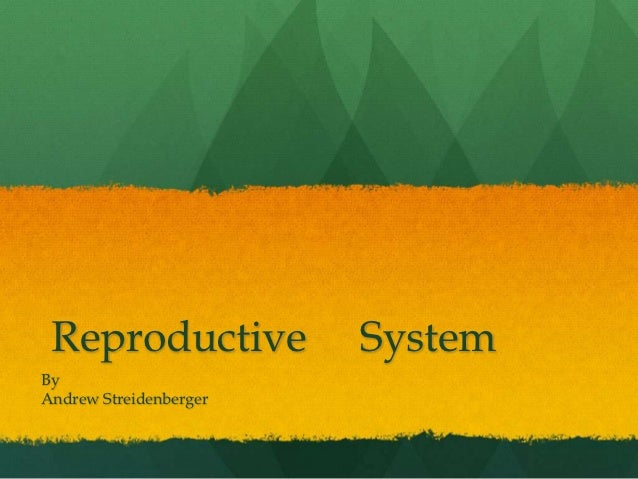 Reproductive           SystemByAndrew Streidenberger