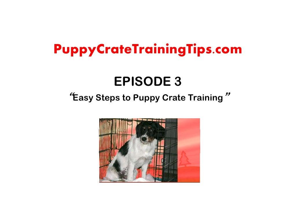 "PuppyCrateTrainingTips.com             EPISODE 3  ""Easy Steps to Puppy Crate Training"""