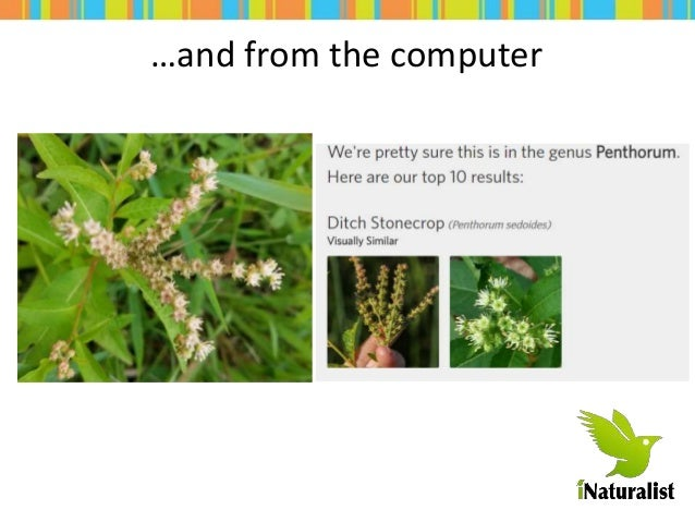 Quick Intro to iNaturalist Slide 3