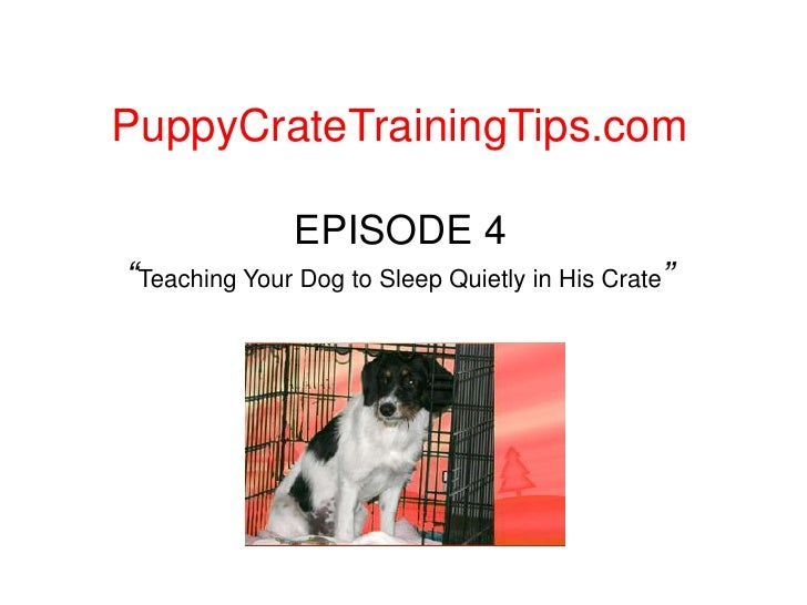 """PuppyCrateTrainingTips.com<br />EPISODE 4""""Teaching Your Dog to Sleep Quietly in His Crate""""<br />"""