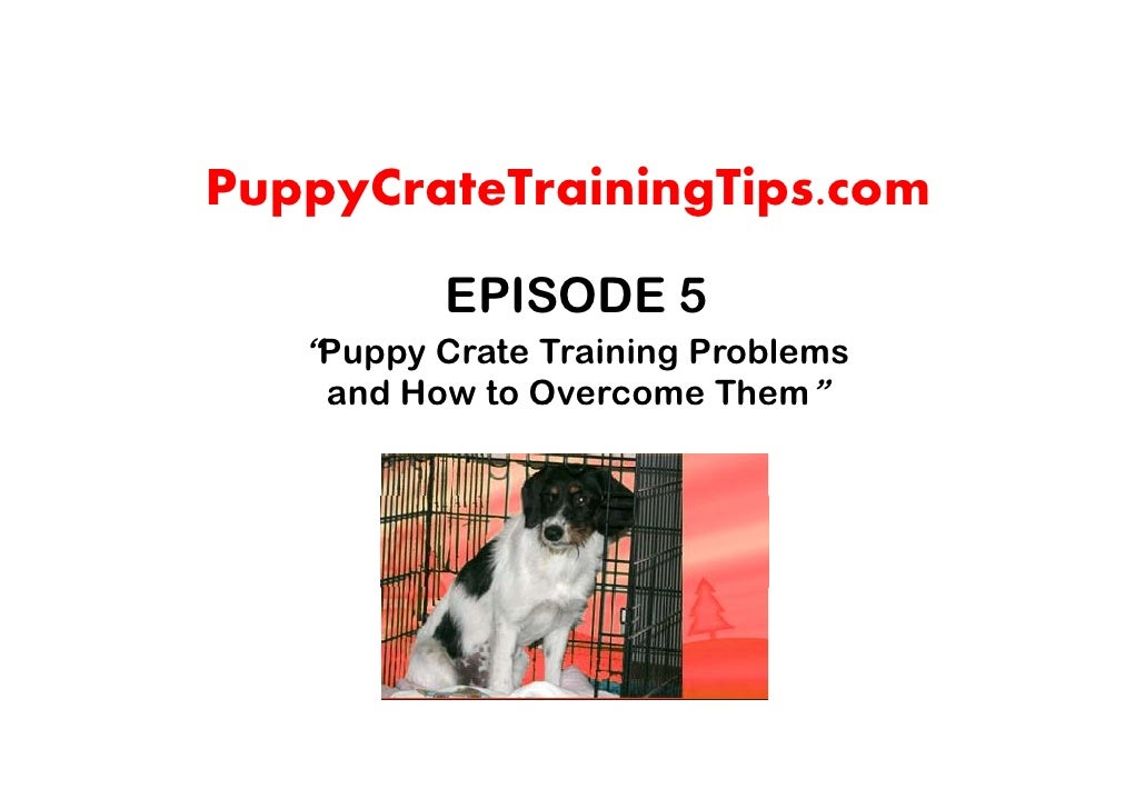 "PuppyCrateTrainingTips.com           EPISODE 5    ""Puppy Crate Training Problems     and How to Overcome Them"""