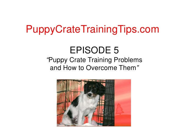 """PuppyCrateTrainingTips.com<br />EPISODE 5""""Puppy Crate Training Problems and How to Overcome Them""""<br />"""