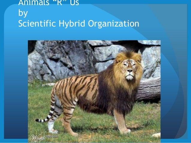 "Animals ""R"" Us by Scientific Hybrid Organization"