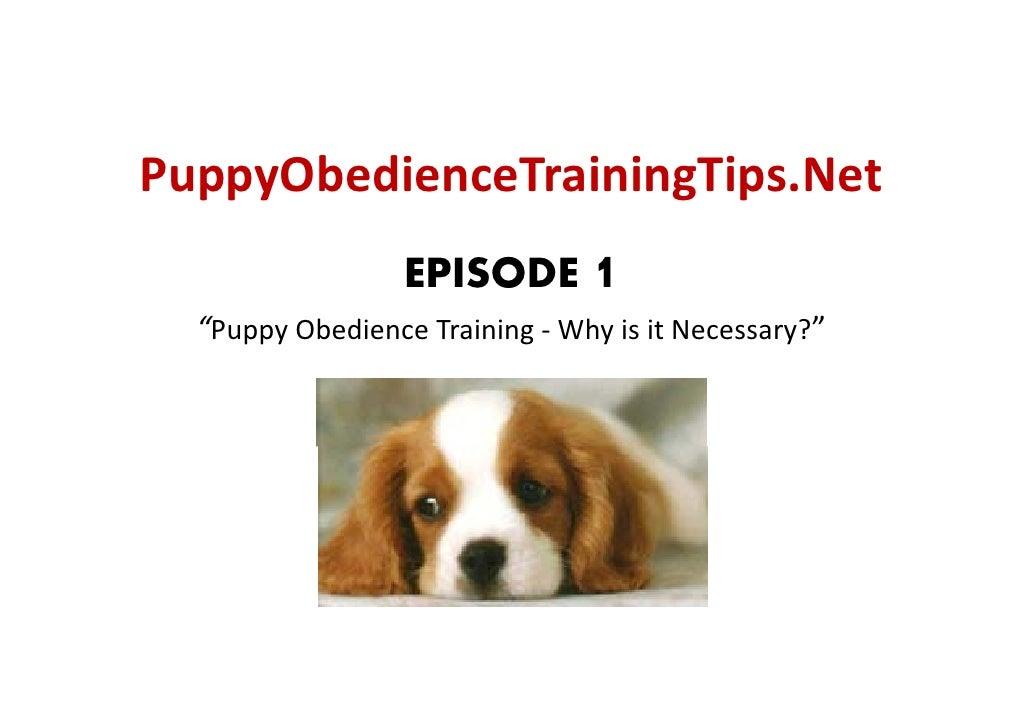 "PuppyObedienceTrainingTips.Net   ppy                g p                   EPISODE 1   ""PuppyObedienceTraining‐ Whyisi..."