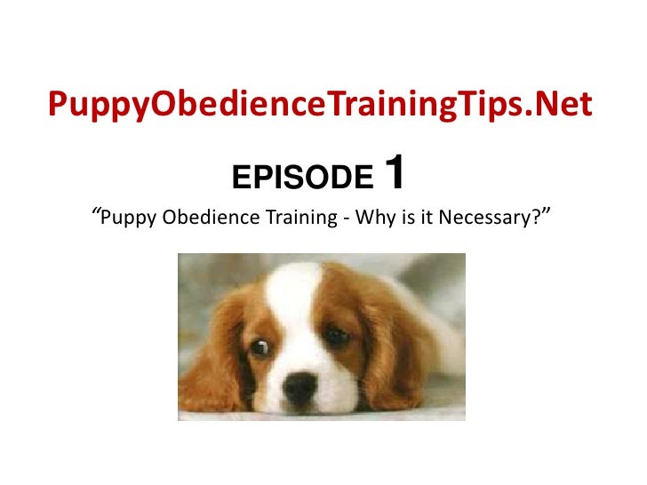 """PuppyObedienceTrainingTips.Net<br />EPISODE 1""""Puppy Obedience Training - Why is it Necessary?""""<br />"""
