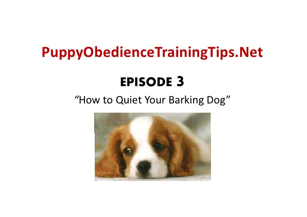 "PuppyObedienceTrainingTips.Net   ppy                g p              EPISODE    3     ""HowtoQuietYourBarkingDog"""