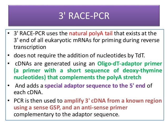 5' RACE-PCR • begins using mRNA as a template for a first round of cDNA reaction using an oligonucleotide primer that reco...