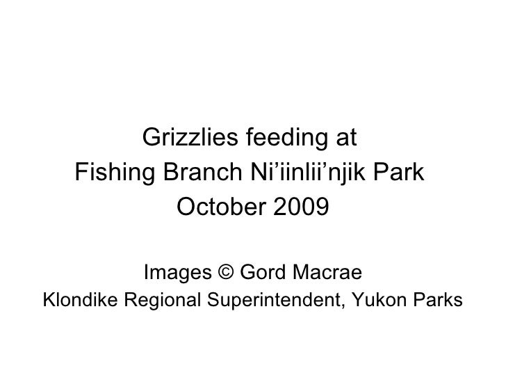 <ul><li>Grizzlies feeding at  </li></ul><ul><li>Fishing Branch Ni'iinlii'njik Park  </li></ul><ul><li>October 2009 </li></...