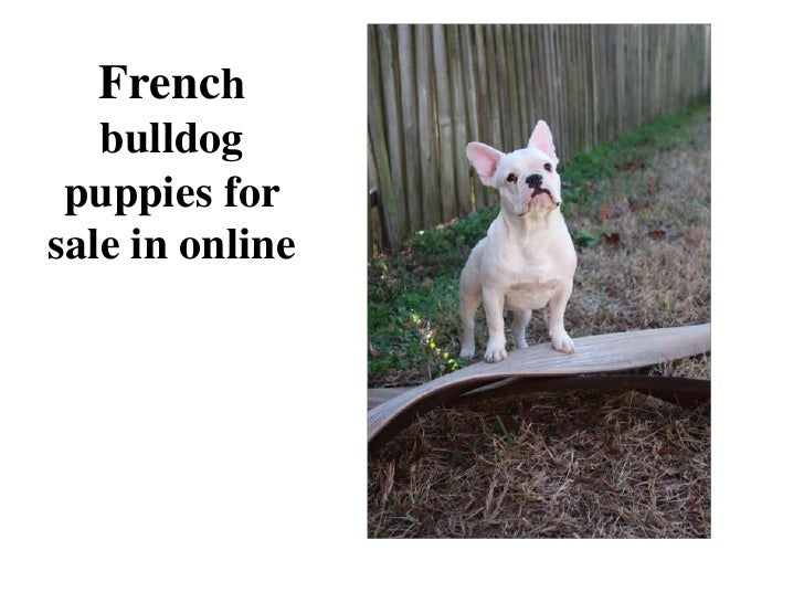 French bulldog puppies for sale in online<br />