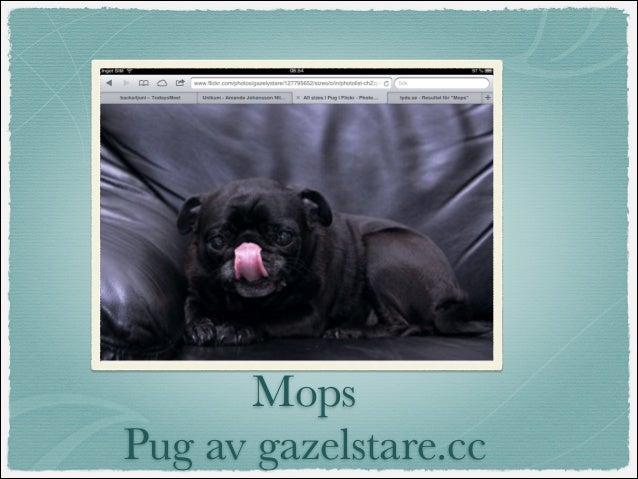 MopsPug av gazelstare.cc