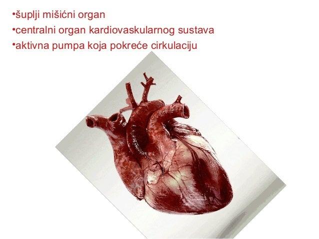 •šuplji mišićni organ •centralni organ kardiovaskularnog sustava •aktivna pumpa koja pokreće cirkulaciju