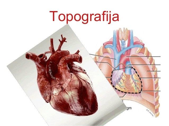 Topografija • srčana osa ide od • GORE DESNO I prema DOLE, LEVO I NAPRED • 2/3 srca leži ulevo,a 1/3 udesno