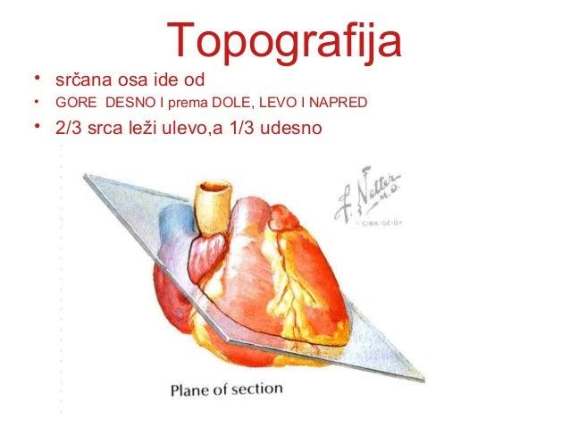 TopografijaSRCE je smešteno u prednjem medijastinumu,naleže na dijafragmu.SRCE je smešteno u prednjem medijastinumu,naleže...