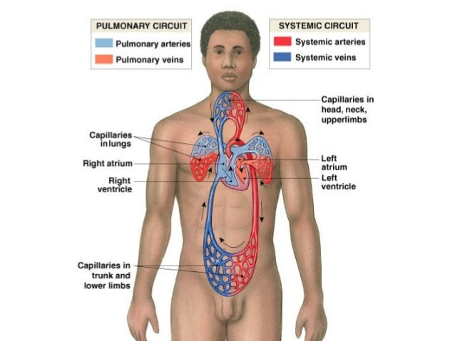 Anomalija razvoja aortnog luka Desni aortni luk