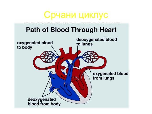 D' D G G' α Tr2Tr1 Tr Th RA VCS (Asc.A) T A PA A.AL LV Rtg pluća i srca – normalan nalazRtg pluća i srca – normalan nalaz